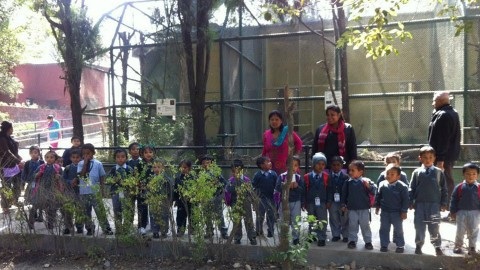 Nursery to class 2 students Jawalakhel zoo visit 2071