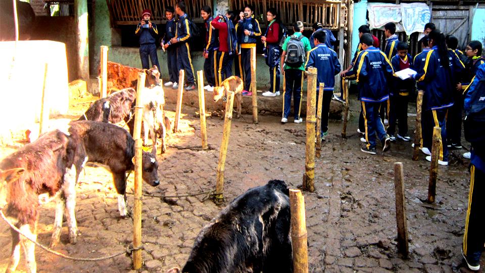 गाई पालन केन्द्रको शैक्षिक भ्रमण